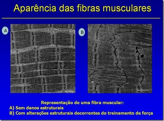 Caracteristicas fibra muscular