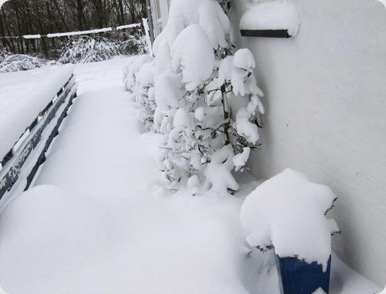 Vinter jan 2010 007