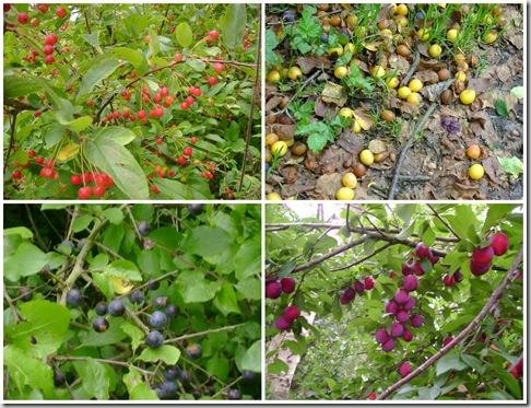 Frugter i haven 1