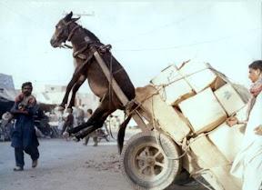 overloaded donkey funny