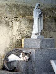 gato_cemiterio 2