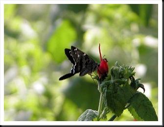 butterfly3jpg