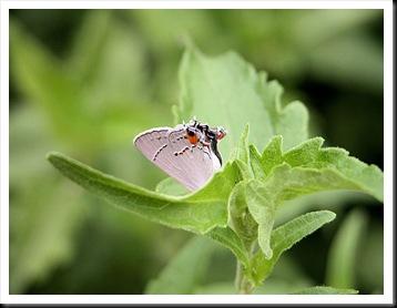 butterfly5jpg