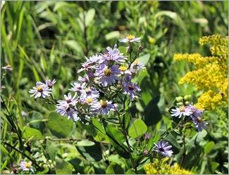 purpleflowersicesp
