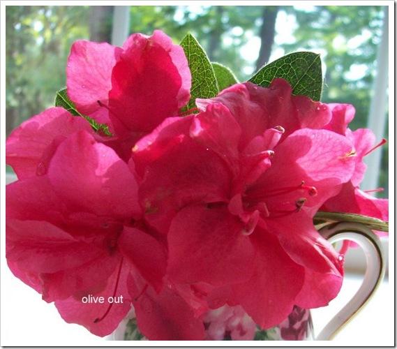 pink 025