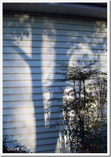 shadows 034