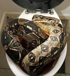 snake-paultard.jpg