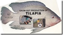 Grow-out production of Tilapia