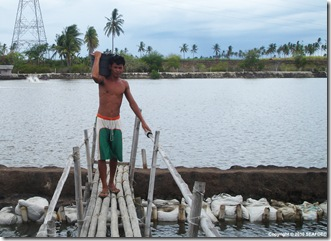 The Lua family farm in Cebu