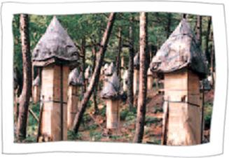 Chilgok Mt.Hwanghaksan Tobong Honey