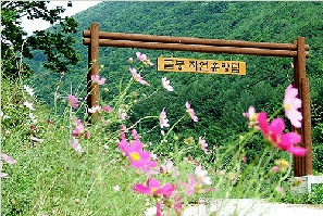 Uiseong Geumbong Recreational Forest 05