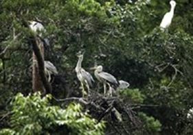 Uiseong Gray Heron Habitat