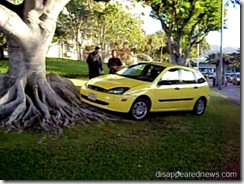Car meets tree