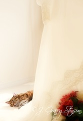 A pretty image of a gray tabby cat sleeping on the hem of a vintage wedding dress, ©J. Gracey Stinson