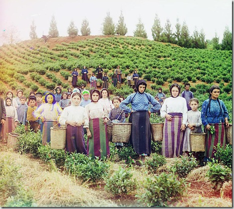 Group of workers harvesting tea. Greek women, Chakva; between 1905 and 1915 Sergei Mikhailovich Prokudin-Gorskii Collection (Library of Congress).