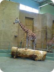zoo 044