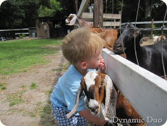 gus hugs the goats