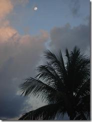 27-03-2010 Cau (4)