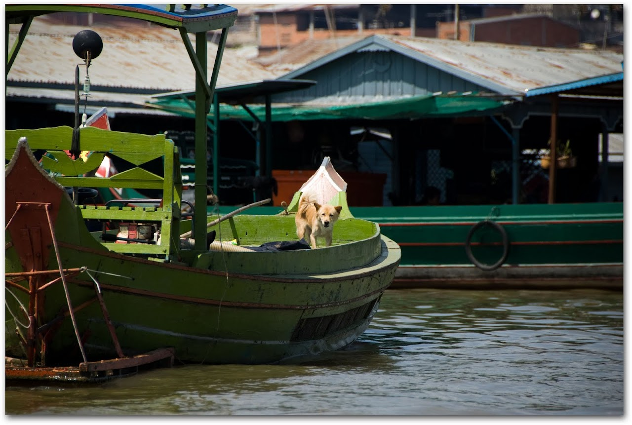 Dog on boat in Kompong Chhnang