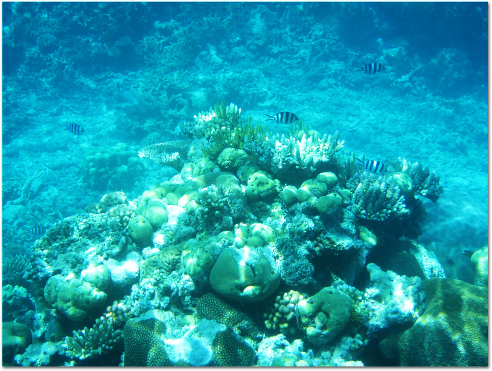 Coral in Great Barrier Reef