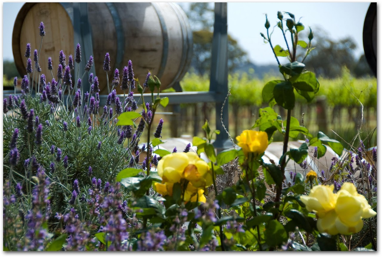 Lavender in front of Charles Melton wine barrels