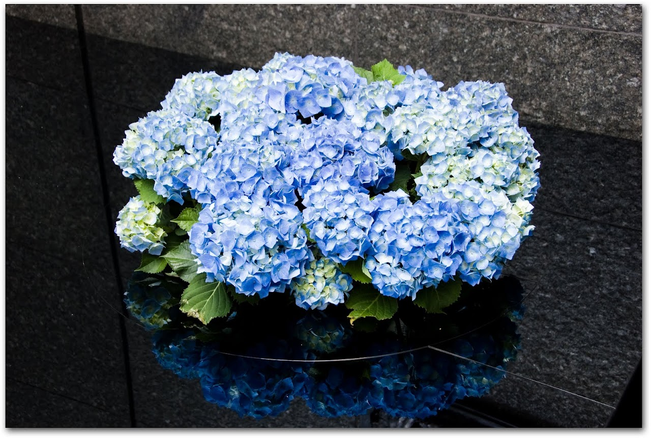 Hydrangeas in Ginza