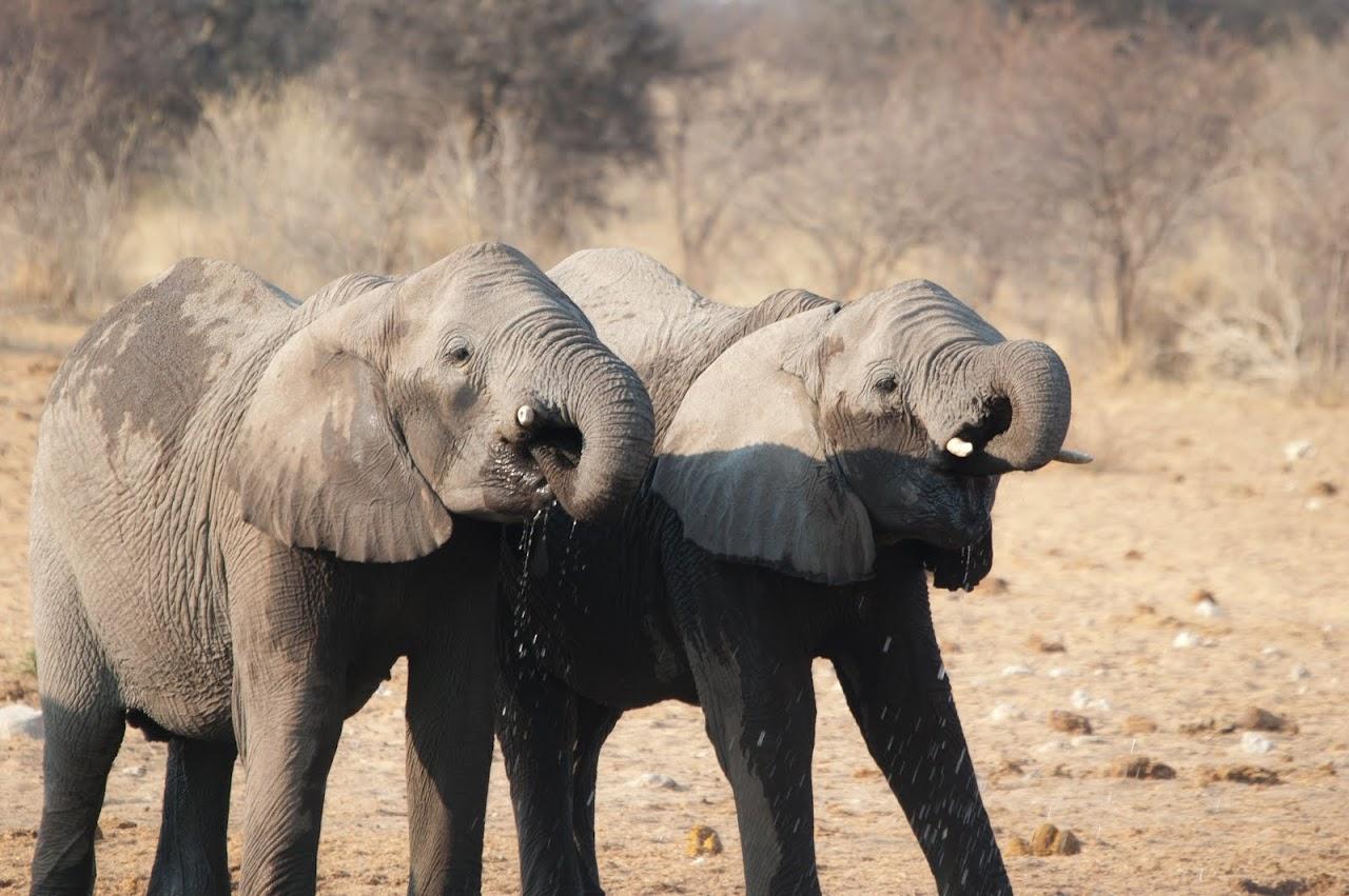 Symmetrical elephants