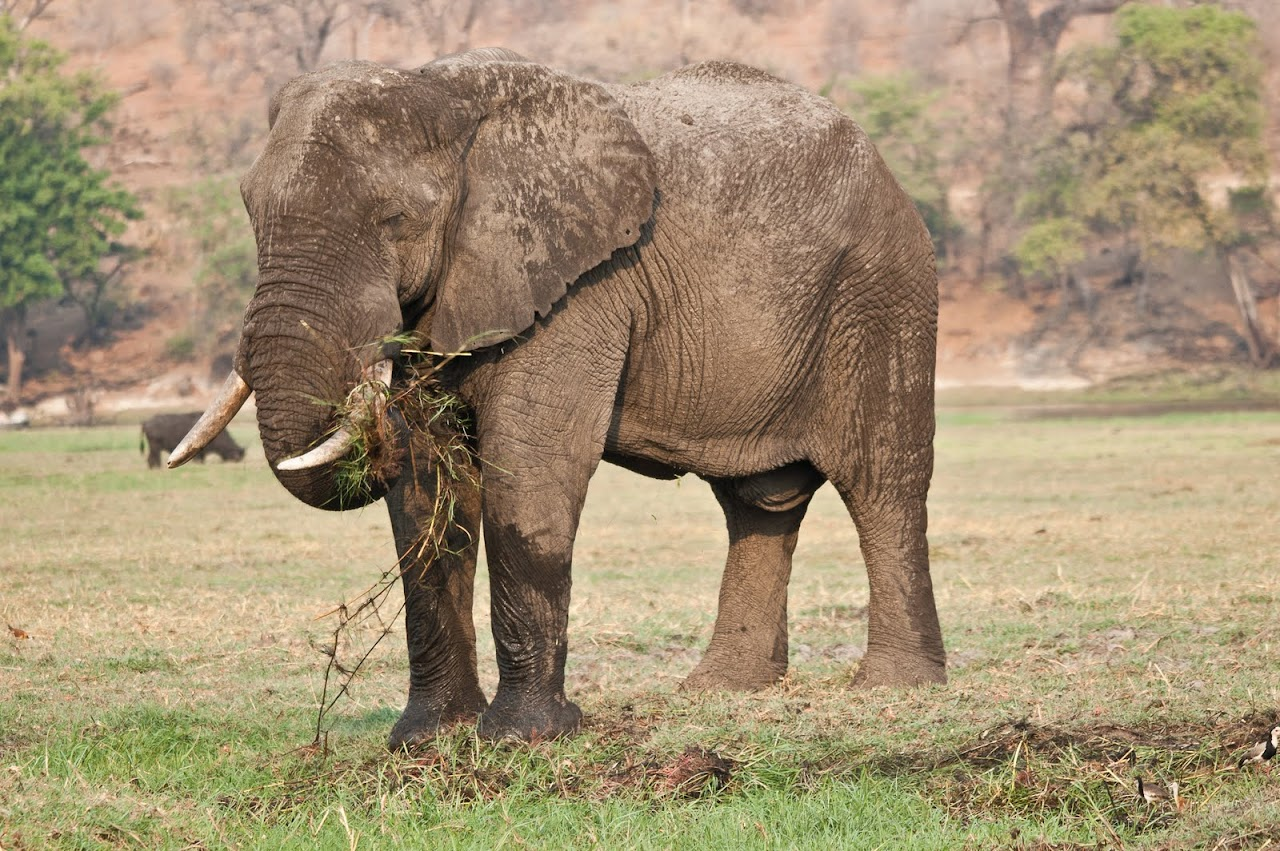 Elephant on bank of river
