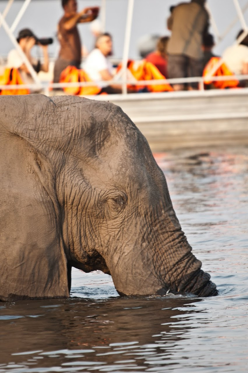 Elephant crossing river with boat in background