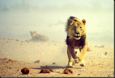 etosha_national_park_namibia04
