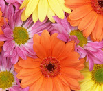 Daisies_33564845.jpg