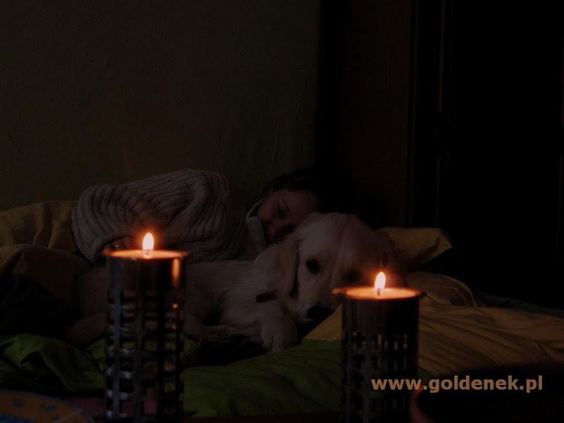 Golden Retriever przy świecach