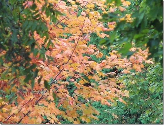 Robinson Photos Sept. 3 525