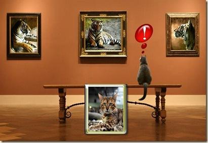 من قط إلى نمر