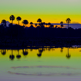 emerald by David Ubach - Landscapes Waterscapes ( water, waterscape, silhouette, palm trees, reflections, lake, landscape )