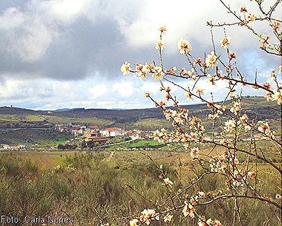Castelo Branco enfeitada de flores de amendoeira