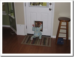 AJ kept checking out the doggie door to see what Sadie and Mav were up to! So cute!!