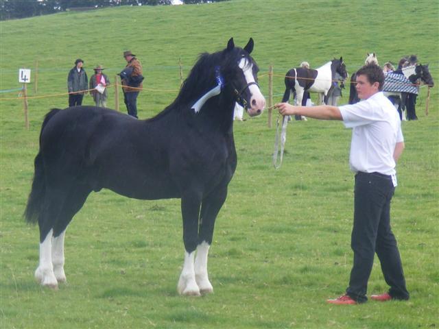 Newydd Bonheddwr  Hay Show 09