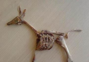 kfc bone