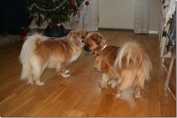 Kiara og Snoopi