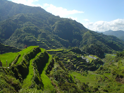 Wallpaper Collection The Rice Terrace Fields Of Banaue The Philippines On The Lucon Island