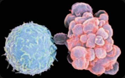 Mitokondria Ternyata Suka Berulah
