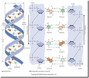 Materi Genetis : ADN dan ARN