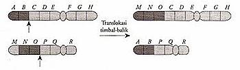 translokasi