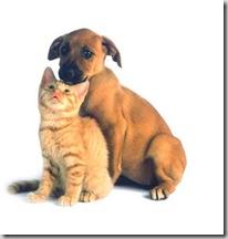 perro_gato