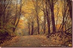 gallery_24495_34_1289766527