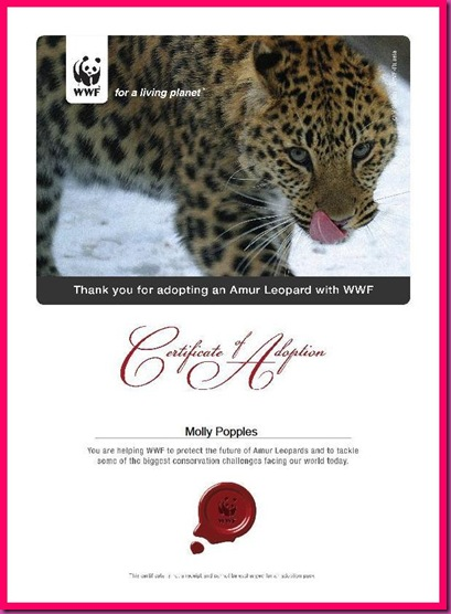 Molly Amur Leopard