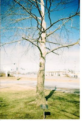 VanHoose Hippocratic Oath tree