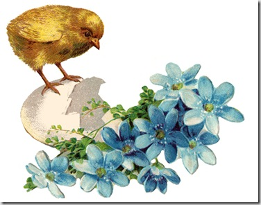 baby-chicks-5