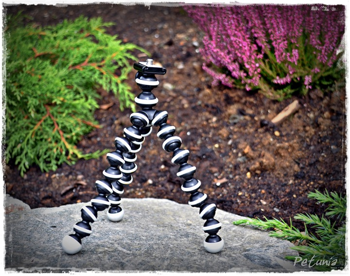 Gorilla Pod